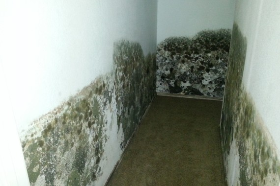 Mould – What Can You Do?
