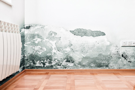 Surprising Misdiagnoses for Mould Exposure